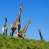 Oceana Beach & Wildlife Reserve